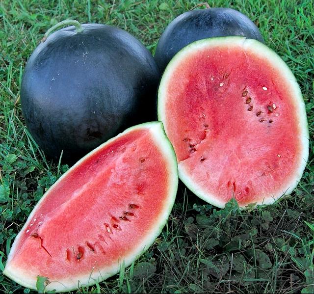 Blacktail Mountain Wassermelone