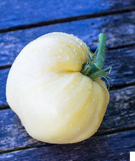 Albino Herz Tomate