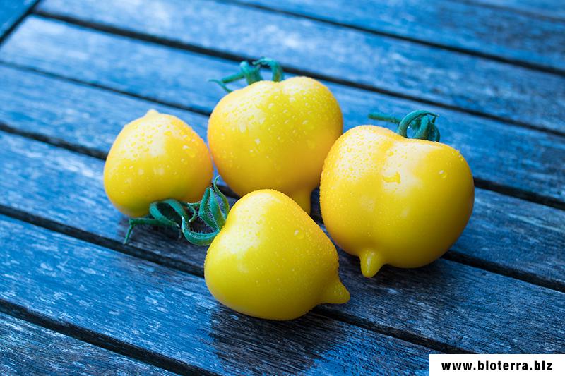 Anna German Tomate
