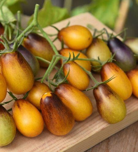 Indigo Pear Drops Tomate